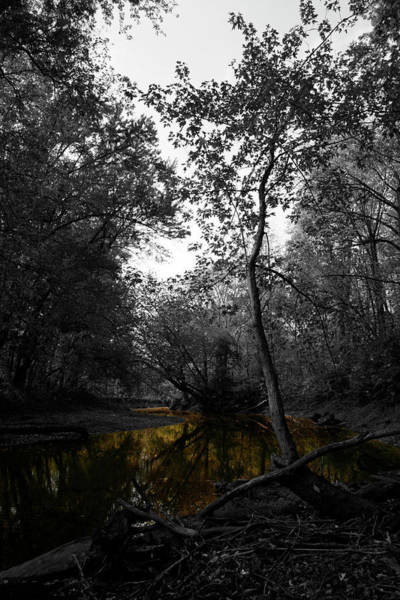 Photograph - Meander by Dylan Punke
