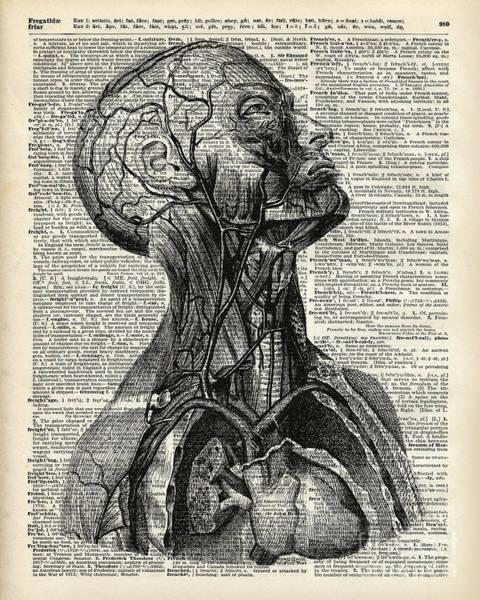 Mixed Media Drawing - Medical Human Anatomy by Anna W