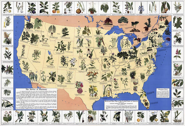 Wall Art - Photograph - Medicinal Plant Map Of The U. S.  1932 by Daniel Hagerman