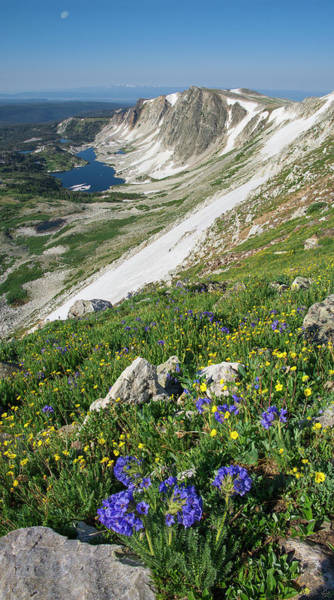 Photograph - Medicine Bow Wildflowers by Aaron Spong