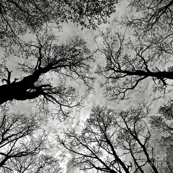 Photograph - Meditative Power Of Trees by Silva Wischeropp