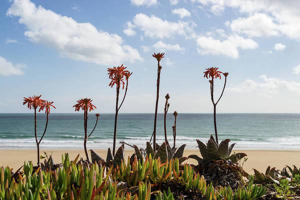 Photograph - Mediterranean Beach Garden by Georgia Mizuleva