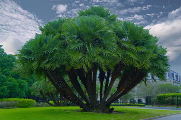 Wall Art - Photograph - Mediterranean Palm Tree by Art Spectrum