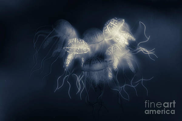 Aquarium Photograph - Medusas Light by Jorgo Photography - Wall Art Gallery