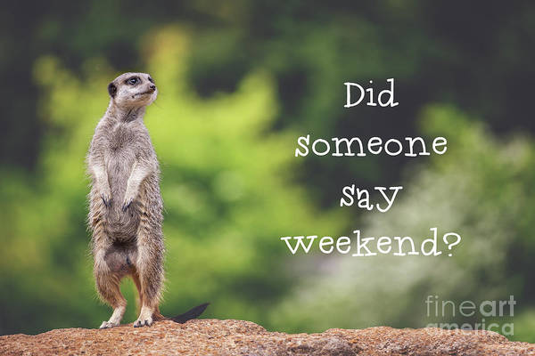 Quotation Photograph - Meerkat Asking If It's The Weekend Yet by Jane Rix