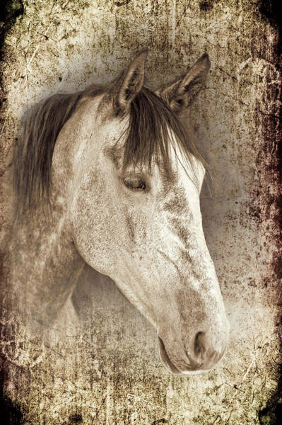 Andalusian Wall Art - Photograph - Meet The Andalucian by Meirion Matthias
