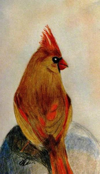 Red Cardinal Drawing - Meet You At The Fence Post by Angela Davies