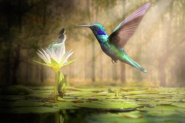 Summertime Digital Art - Meeting Mother Nature by Nathan Wright