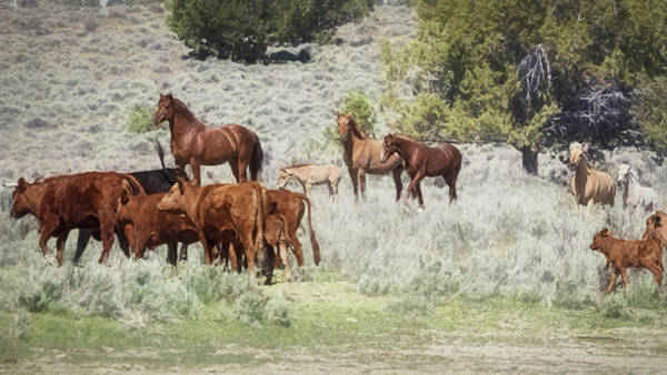 Photograph - Meeting Of The Herds by Belinda Greb