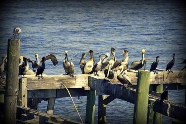 Cedar Key Photograph - Meeting Of The Minds by Laurie Perry