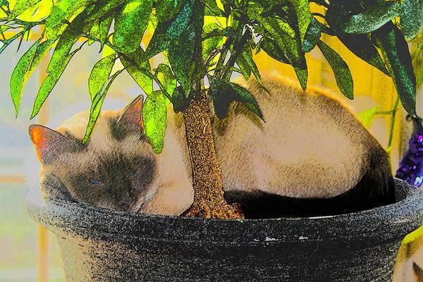 Digital Art - Meezer Tree by William Sargent