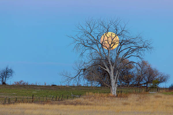 Photograph - Mega Beaver Moon  by James BO Insogna