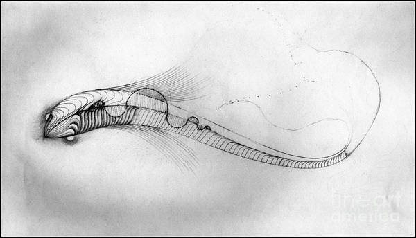 Drawing - Megic Fish 2 by James Lanigan Thompson MFA