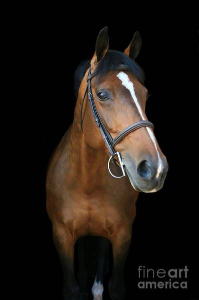 Photograph - Melissa-millie6 by Life With Horses