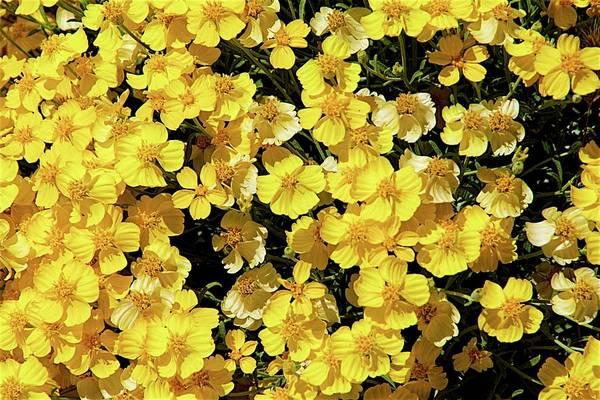 Photograph - Mellow Yellow by Ralph Jones