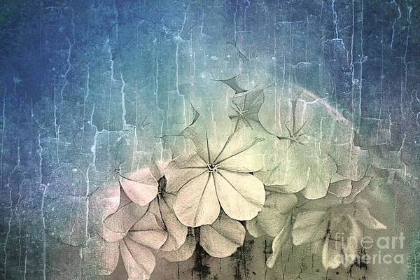 Plumbaginaceae Photograph - Melting  by Clare Bevan