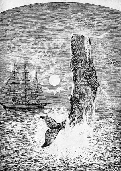 Melville Photograph - Melville: Moby Dick by Granger