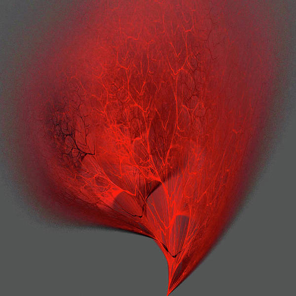 Digital Art - Membrane by Rein Nomm