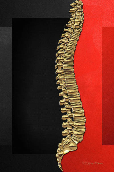 Digital Art - Memento Mori - Gold Human Backbone Over Black And Red Canvas by Serge Averbukh