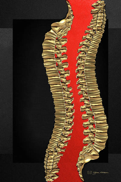 Digital Art - Memento Mori - Two Sets Of Gold Human Backbones Over Black And Red by Serge Averbukh