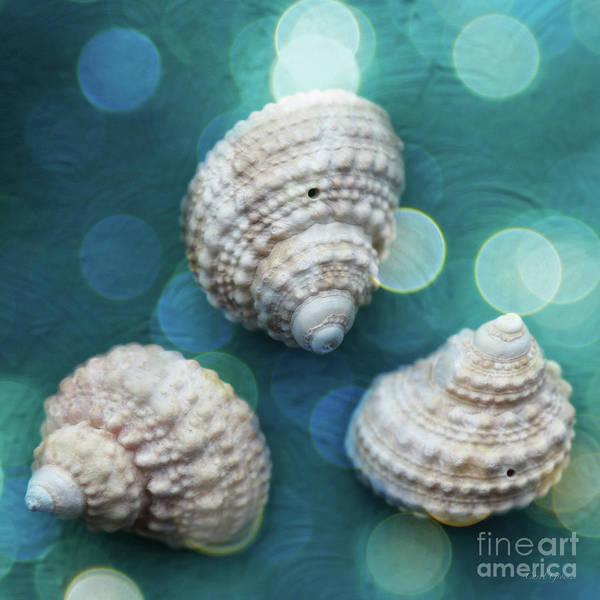 Photograph - Memories Of The Beach by Carol Groenen