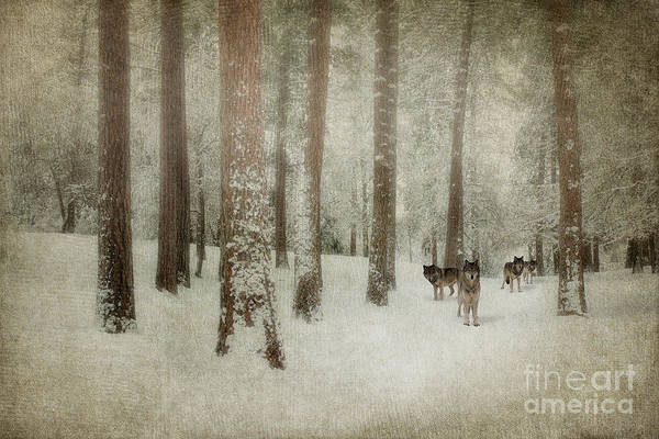 Photograph - Memories Of The Trees by Beve Brown-Clark Photography