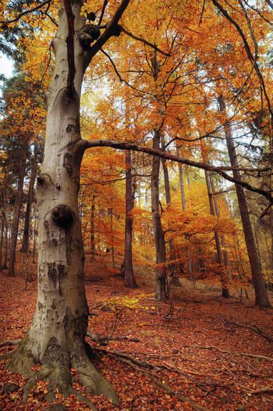 Photograph - Memory Of The Trees by Jenny Rainbow