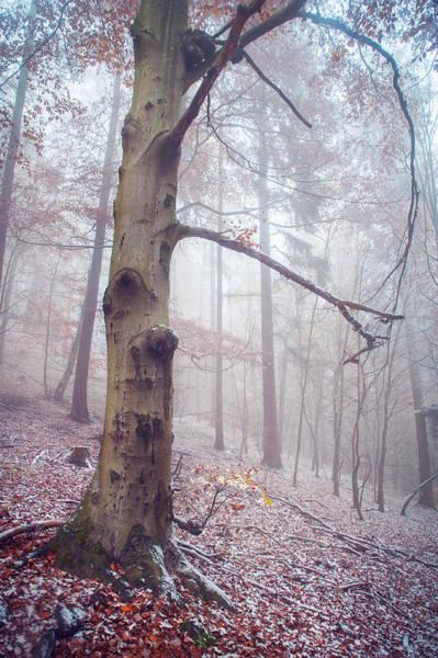 Photograph - Memory Of The Trees. Winter by Jenny Rainbow