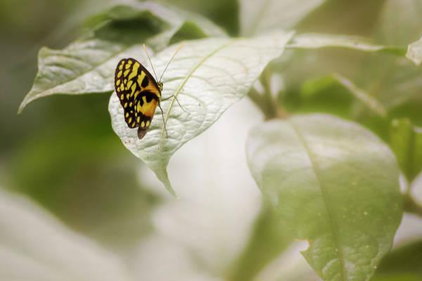 Photograph - Menapis Longwing Butterfly Jardin Botanico Del Quindio Colombia by Adam Rainoff