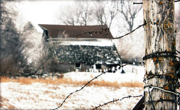 Photograph - Mend The Fence by Julie Hamilton