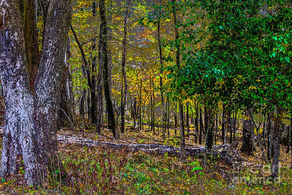Photograph - Mendon Forest by William Norton