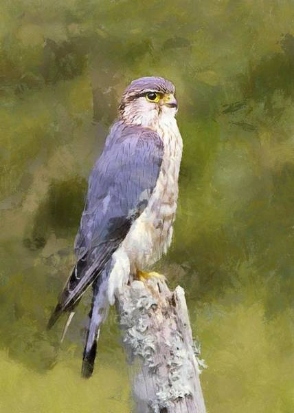 Digital Art - Merlin On A Mossy Stump by Charmaine Zoe