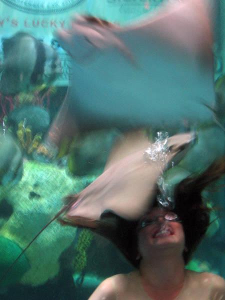 Wall Art - Photograph - Mermaid by Julie Niemela