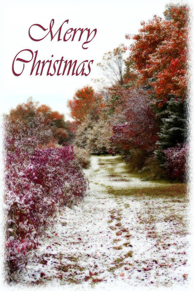 Photograph - Merry Christmas Colours And Snow by Cathy Beharriell
