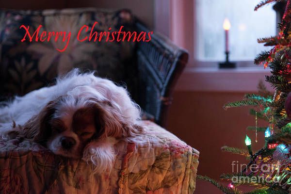 Photograph - Merry Christmas by Dale Powell