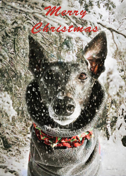Photograph - Merry Christmas Dog by Bellesouth Studio