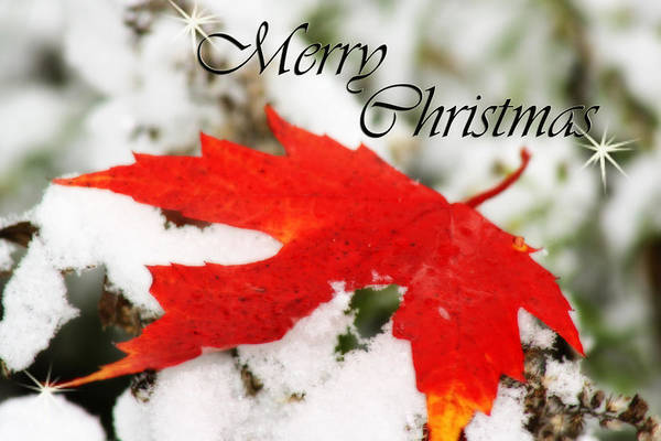 Photograph - Merry Christmas Leaf by Cathy Beharriell