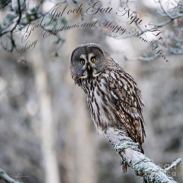 Photograph - Merry Christmas Owl by Torbjorn Swenelius