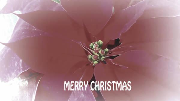 Mixed Media - Merry Christmas Poinsettia by Pamela Walton