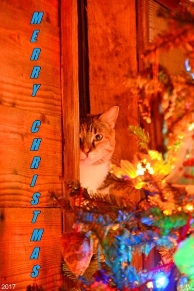 Merry Christmas Waiting For Santa Art Print