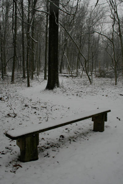 Photograph - Merwin Winter Bench by Dylan Punke