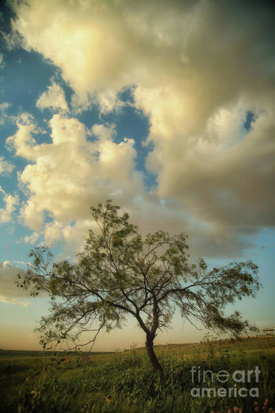 Photograph - Mesquite by Natural Abstract Photography