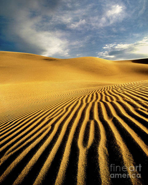 Photograph - Mesquite Sand Dunes Death Valley California by Dave Welling