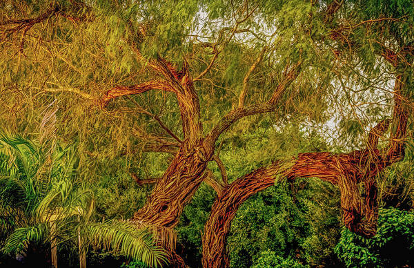 Otp Photograph - Mesquite Twist by Marshall Barth