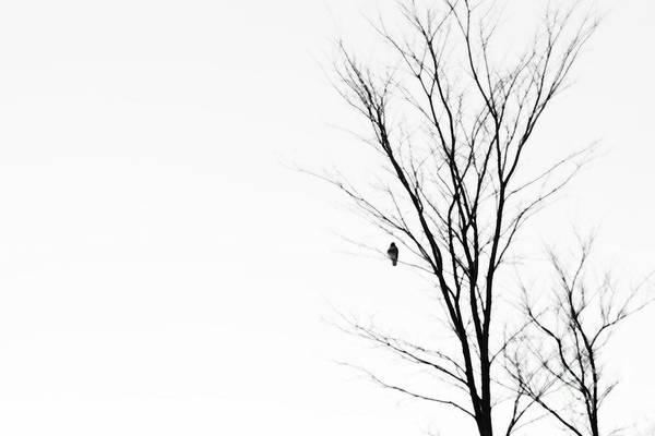 Photograph - Messenger Of Spirit by Linda Shafer
