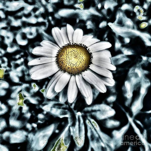 Photograph - Metal Daisy by Jacqueline McReynolds