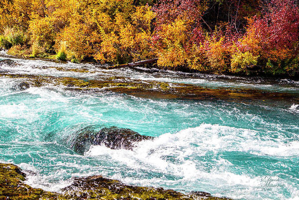 Photograph - Metolius River by David Millenheft