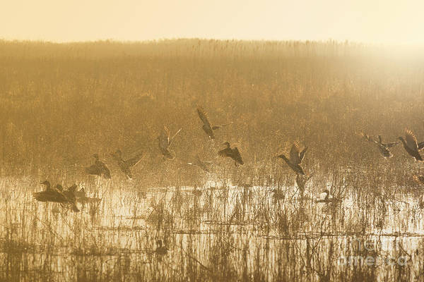 Photograph - Metzgers Marsh In Fog by Charles Owens