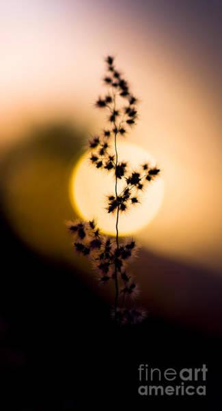 Dof Photograph - Mexican Desert Sunset by Jorgo Photography - Wall Art Gallery