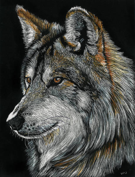 Drawing - Mexican Wolf by William Underwood